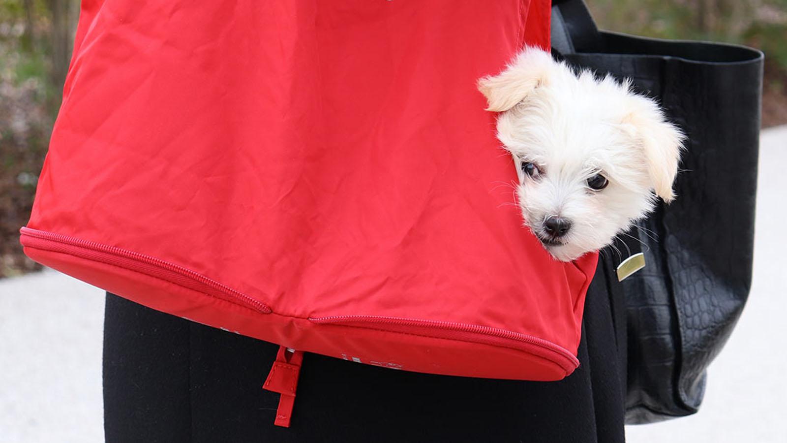 borsa-pieghevole-lazy-dog-united-pets-cane